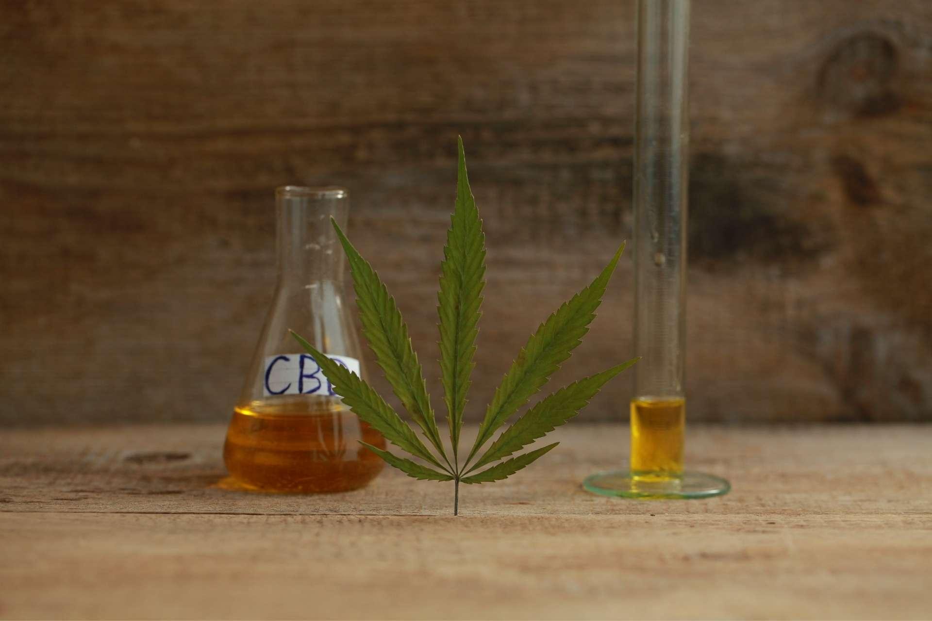 fabriquer de l'huile de CBD à la maison
