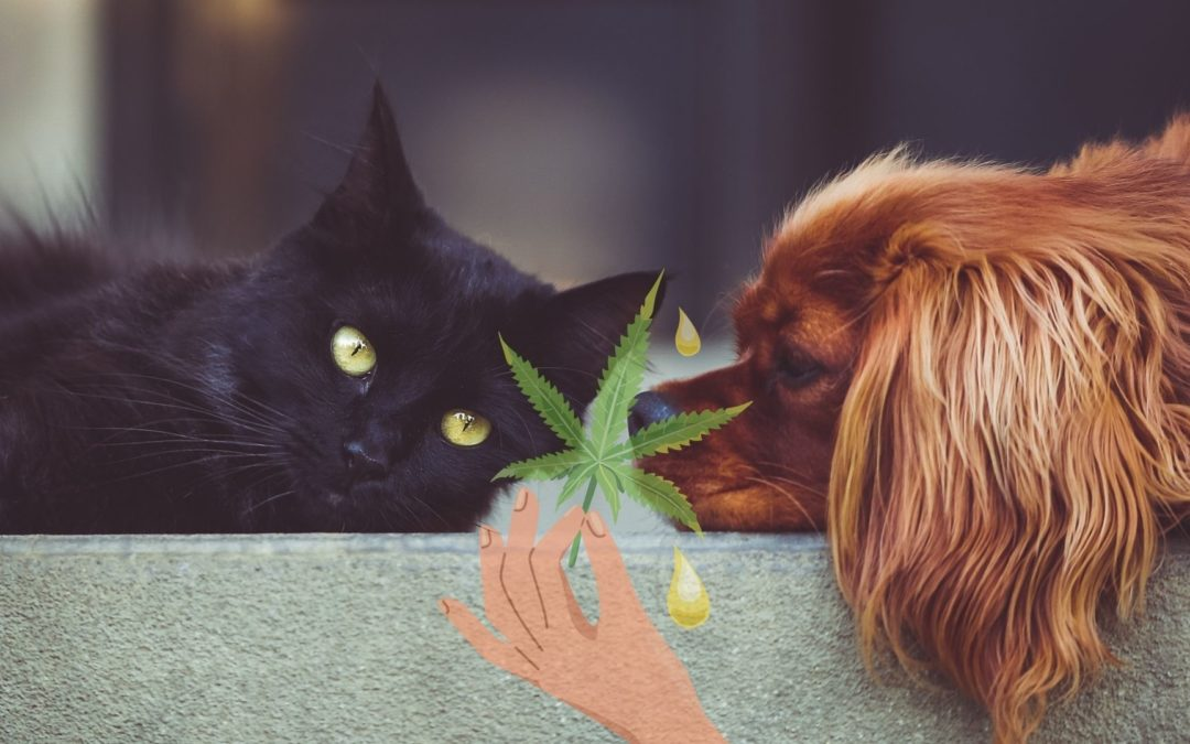 L'utilisation du CBD chez les animaux