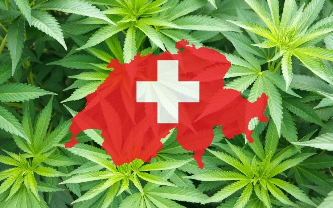 CBD Suisse : les raisons pour lesquelles la Suisse est en tête des ventes