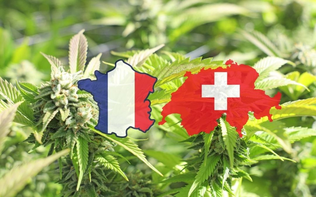 Quelles sont les différences entre le CBD Suisse et le CBD Français?