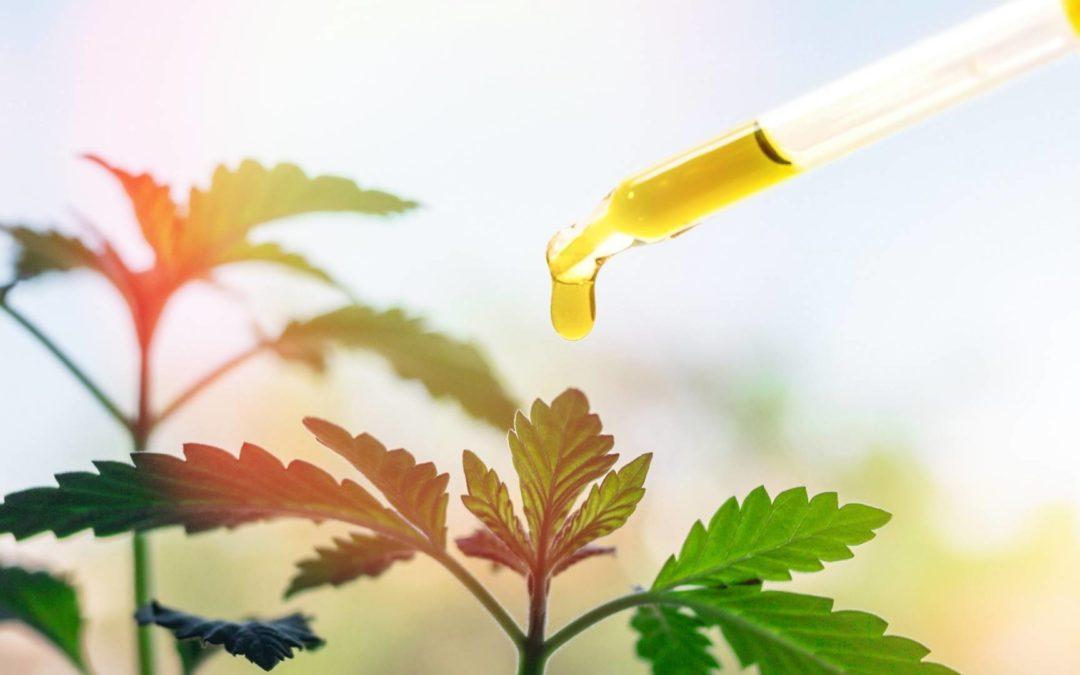 Huile de CBD organique VS. l'huile de CBD non organique: Avantages et inconvénients